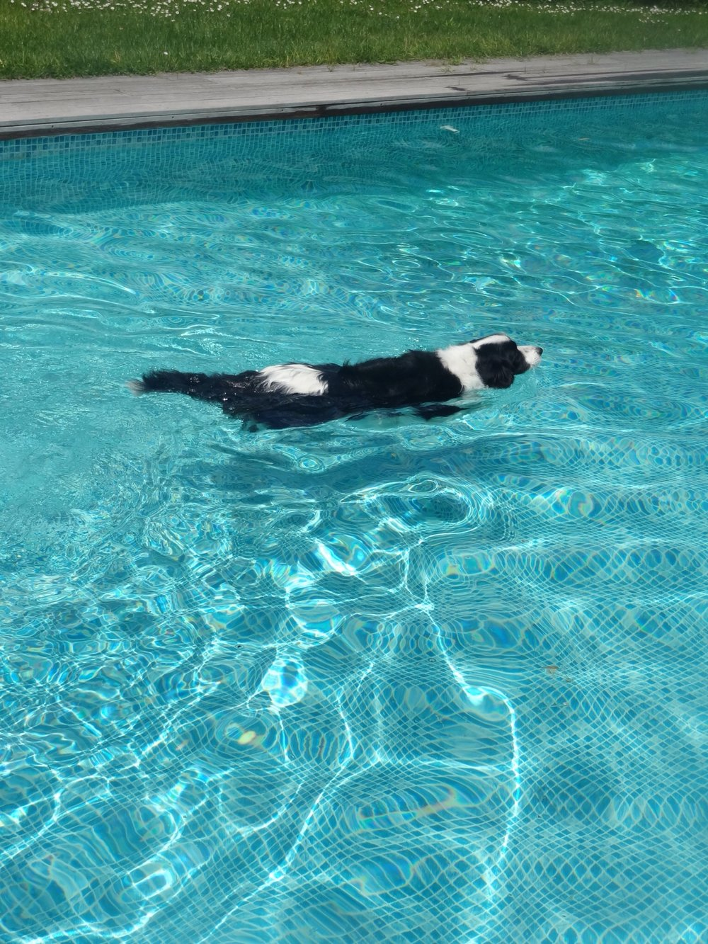 Tiga Swimming