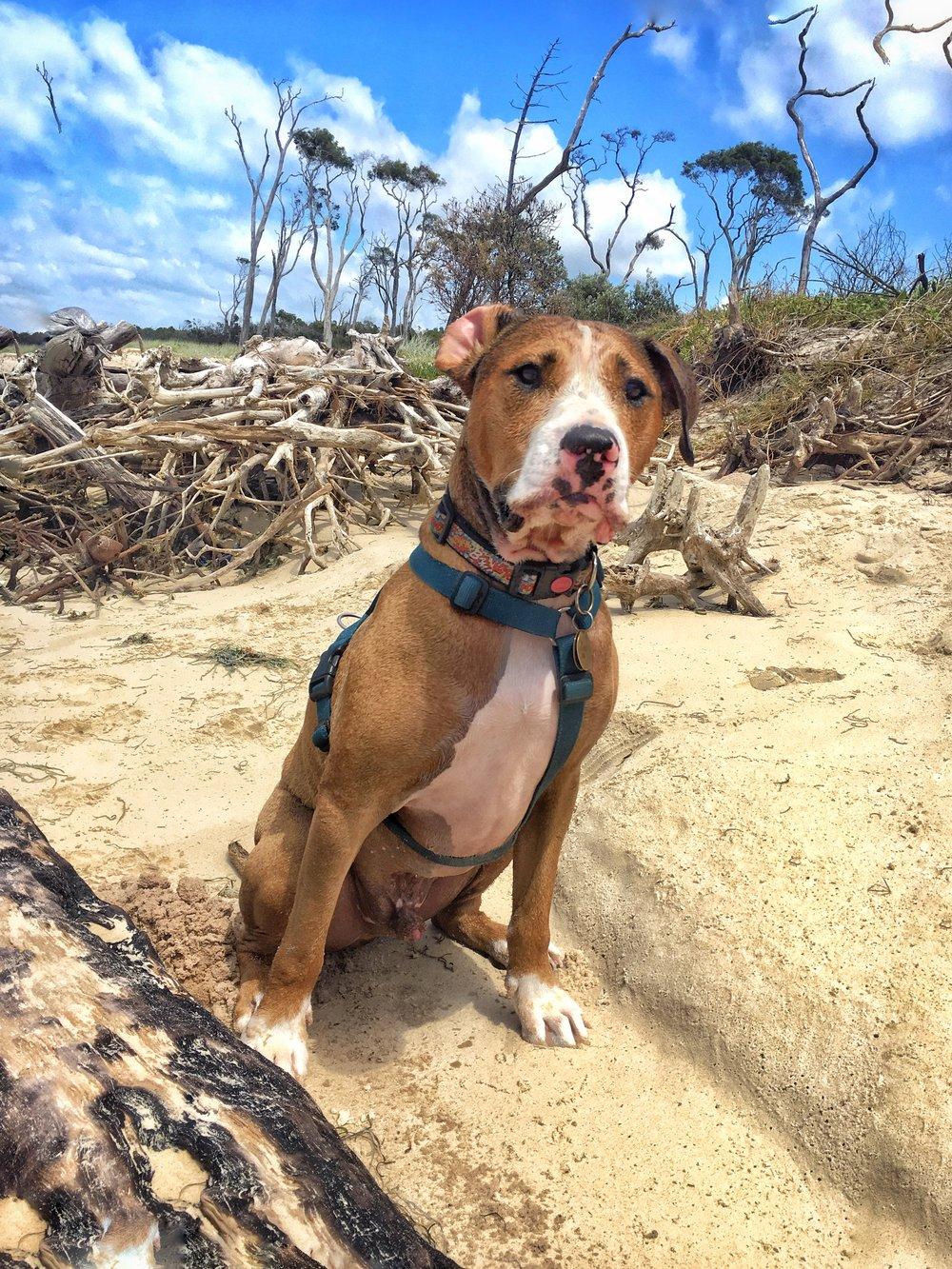 Amos enjoying a morning at the beach