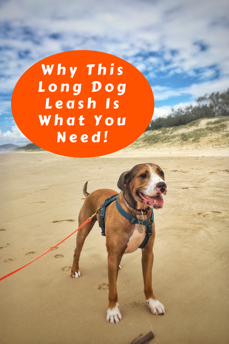 Why This Long Dog Leash Is What YOU Need!.png