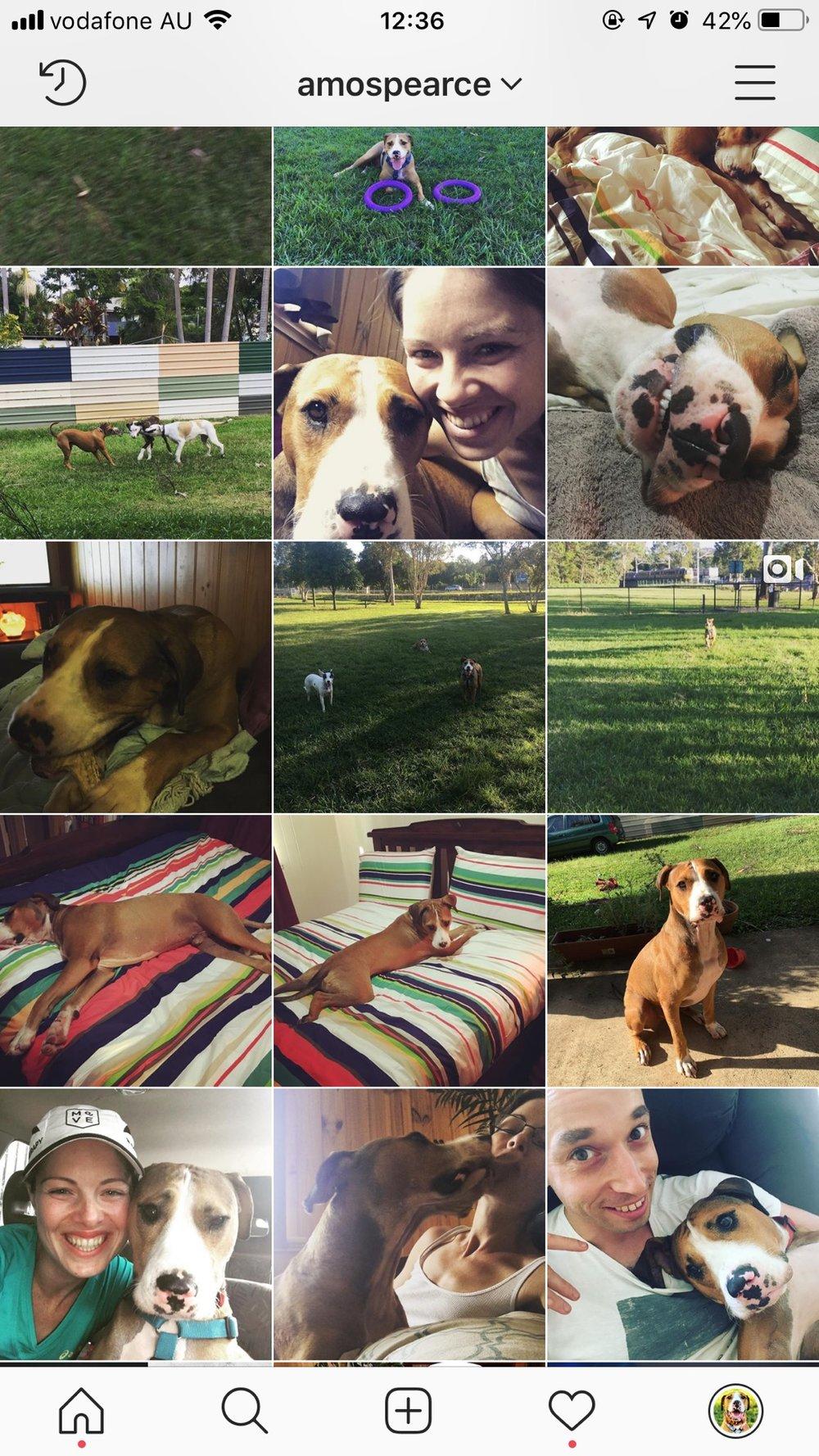 Instagram Feed mid 2016