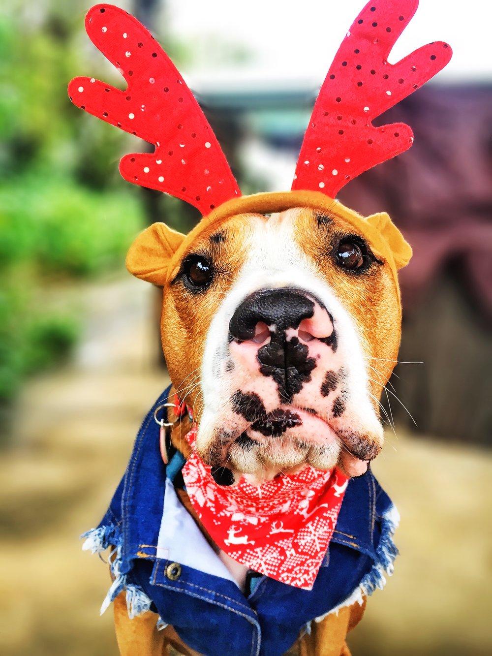 I am so ready for Christmas!