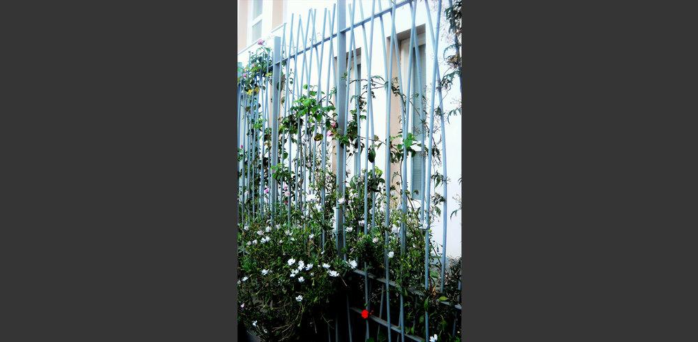 Cloture Clinique fécondation in-vitro Tiziri Alger. Atelier Messaoudi architecture aménagement et design. Bureau d'étude Algérie.