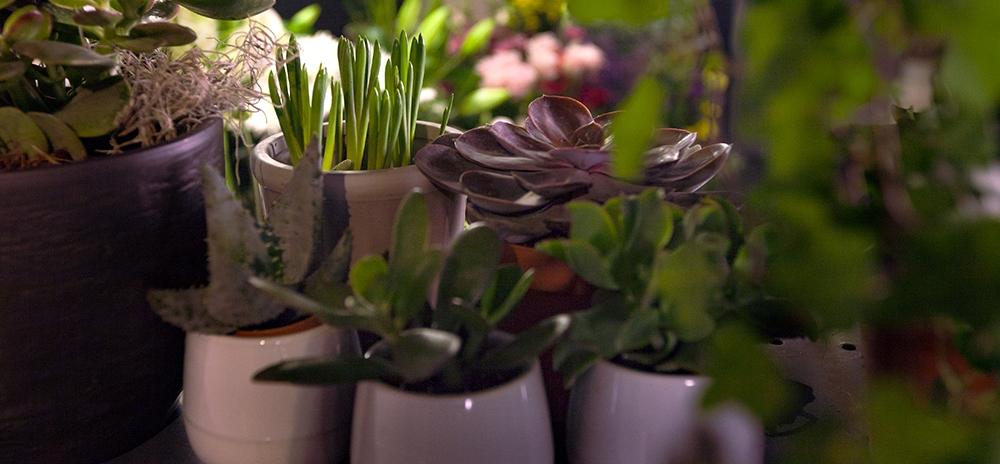 Succulents & more -