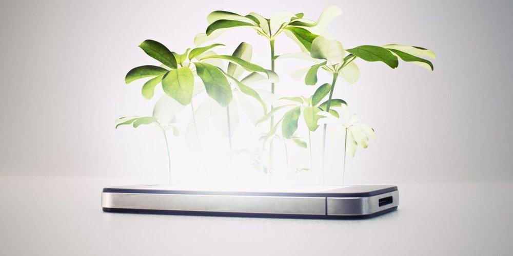 phone plant.jpg