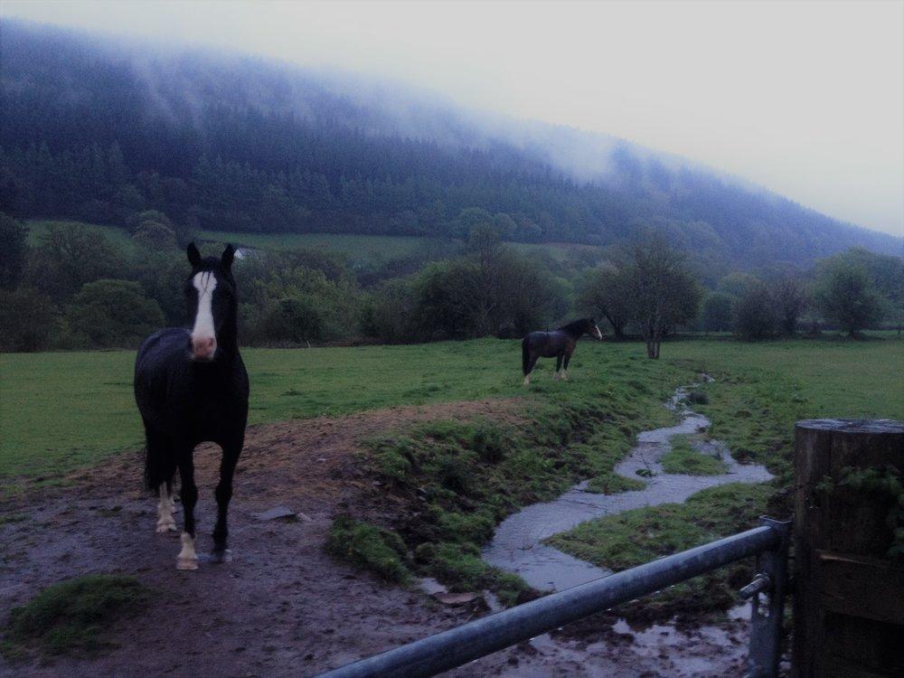mountainswhorses.jpg