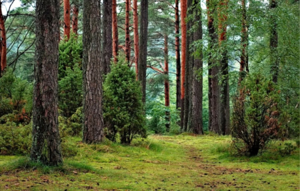 DONATE TO FOREST RESTORATION ORGANIZATIONS -