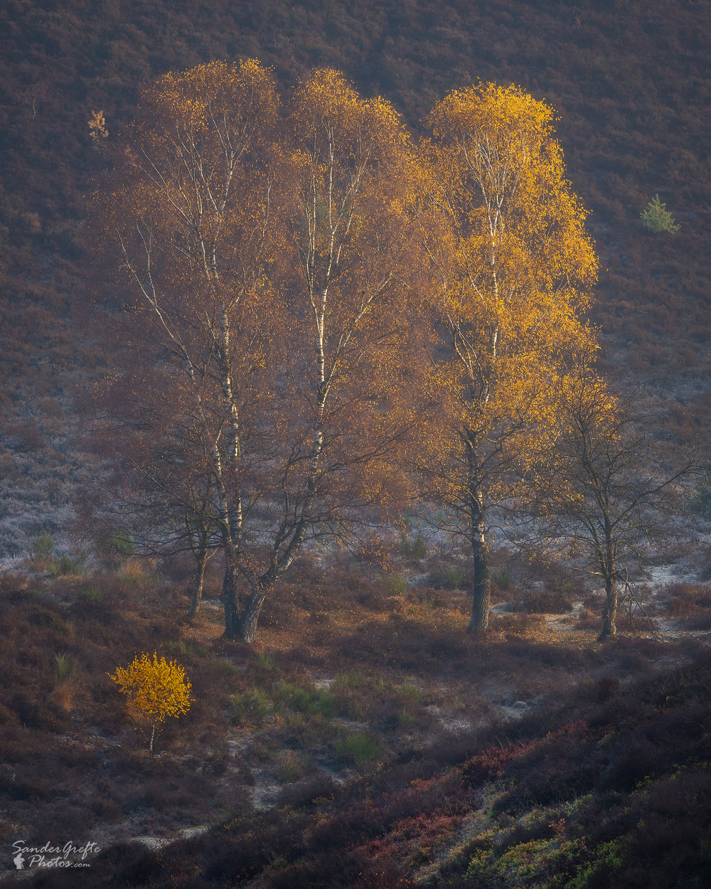 De laatste herfstkleuren op de Posbank (185mm, iso 100, f11, 1/13s)