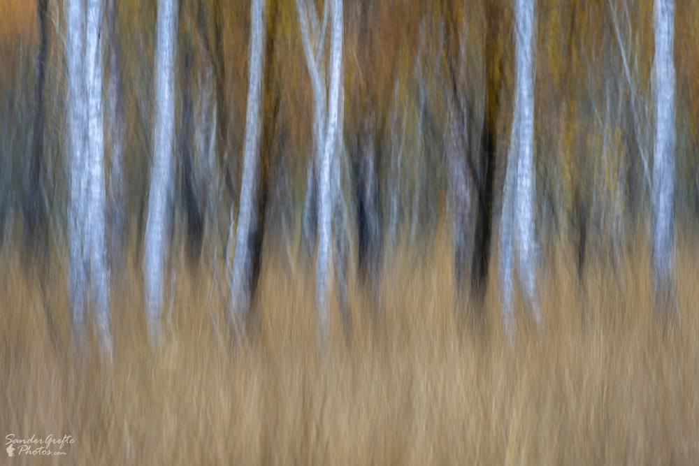 Abstracte weergave van de herfstkleuren (300mm, iso 100, f11, 1/6s)