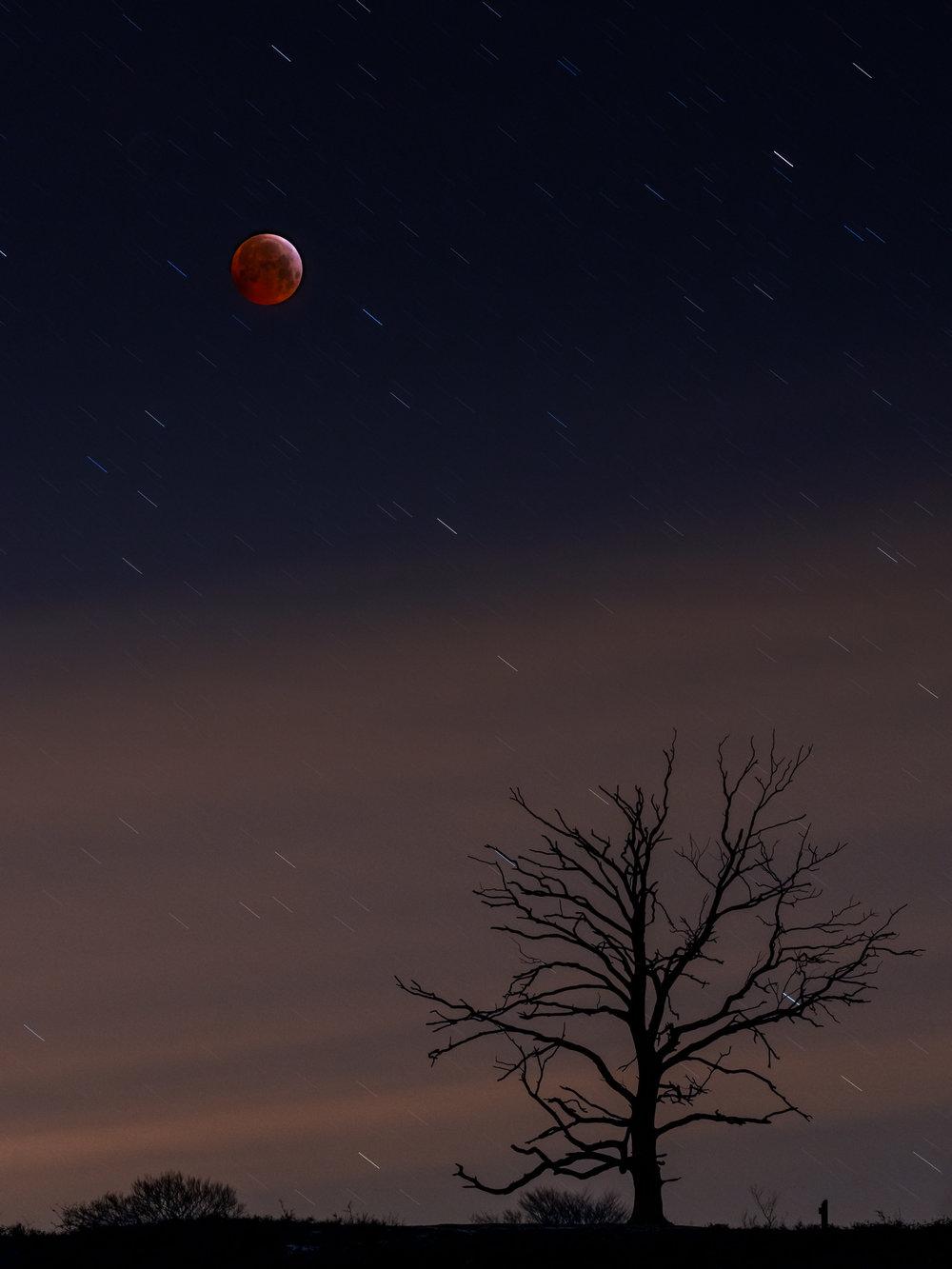 Blend van de maan en de boom. Maan: iso 1000, f8, 1.3s, 110mm. Boom: iso 400, f8, 74s, 70mm.