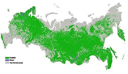 Russian Foresr fund