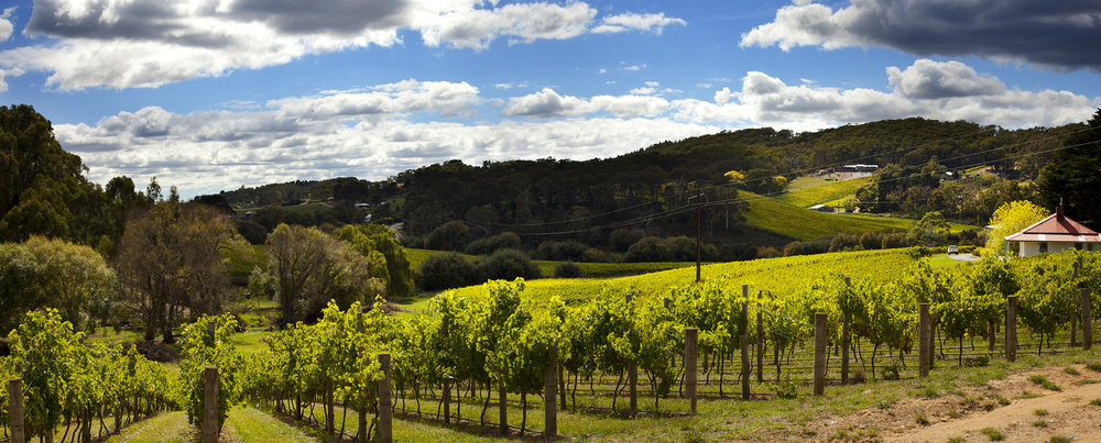 Vineyards in the lush greenery of the Adelaide Hills.  Source