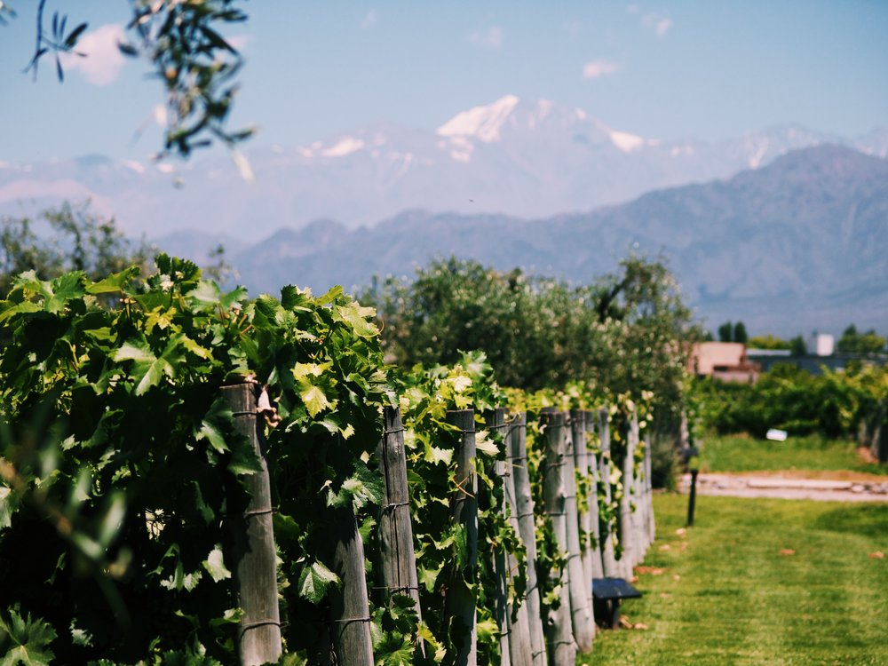 - The Malbecs of Mendoza (With Just a little Cabernet Franc)