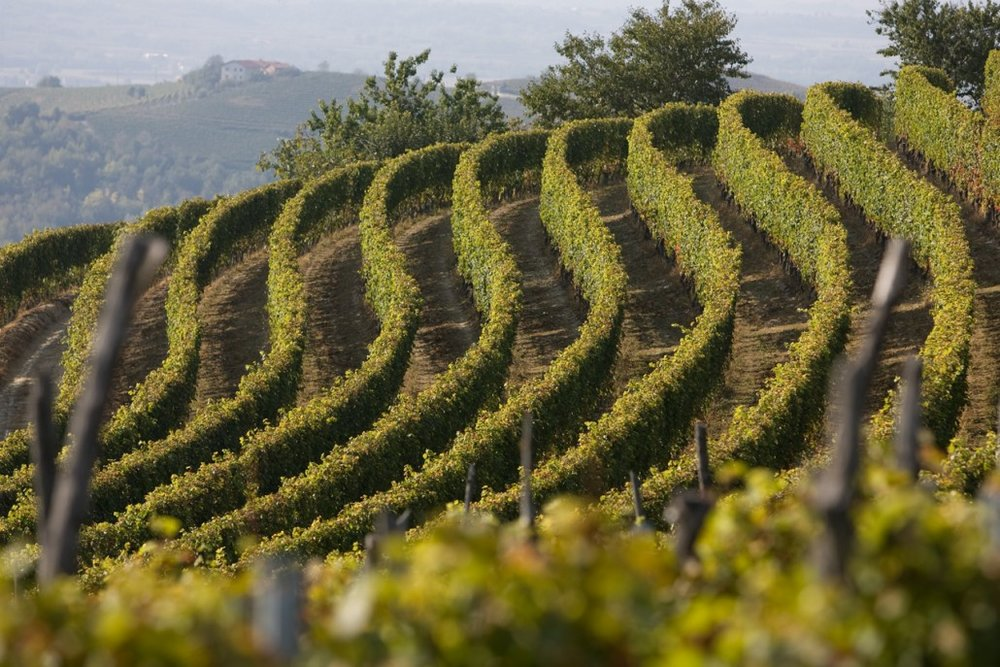 Some of Revelli's Vineyards.  Image Source