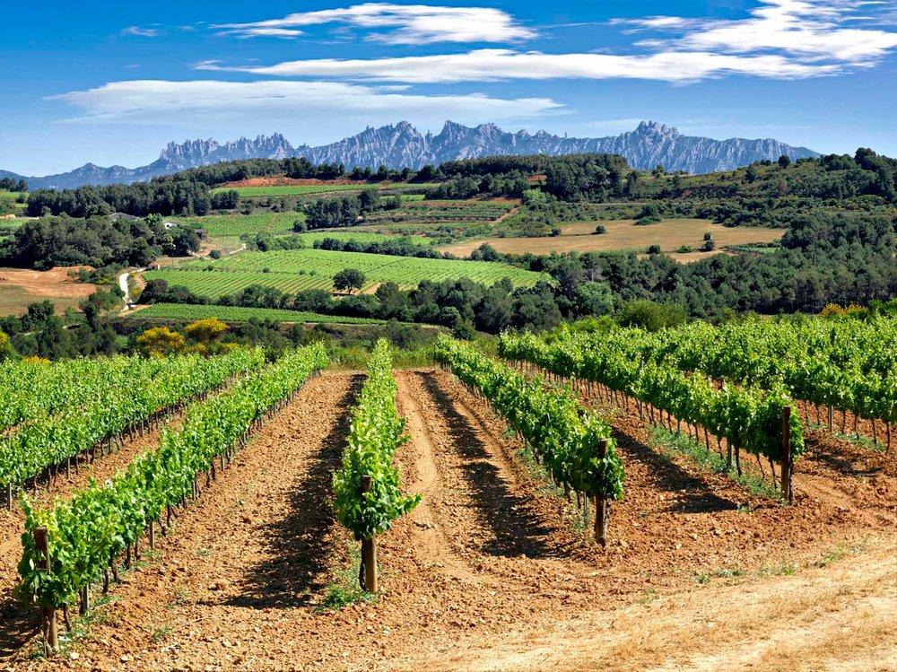 Vineyards in Catalonia