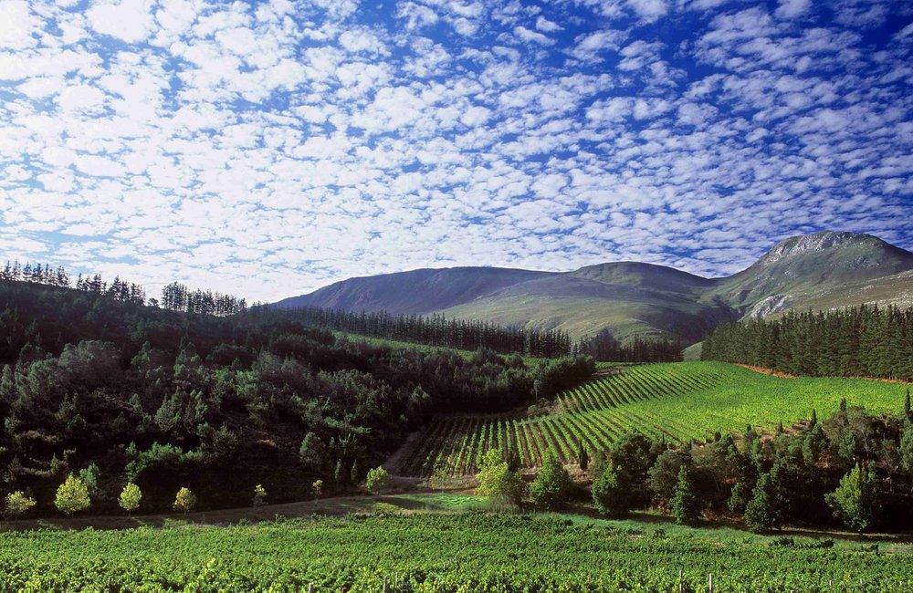 The Estate of Paul Cluver in the Elgin Valley