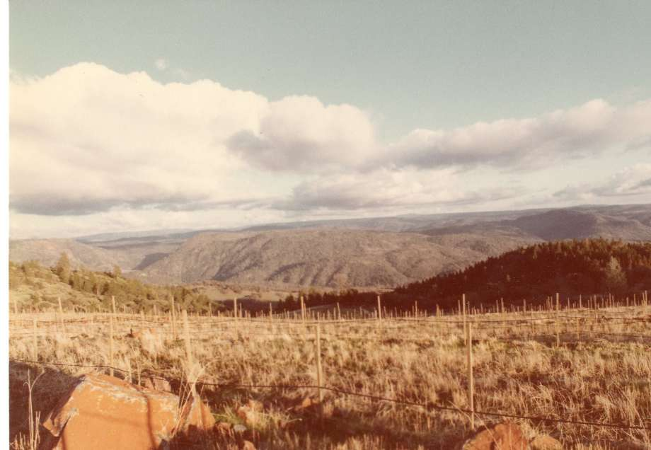 Renaissance vineyards in development, 1981