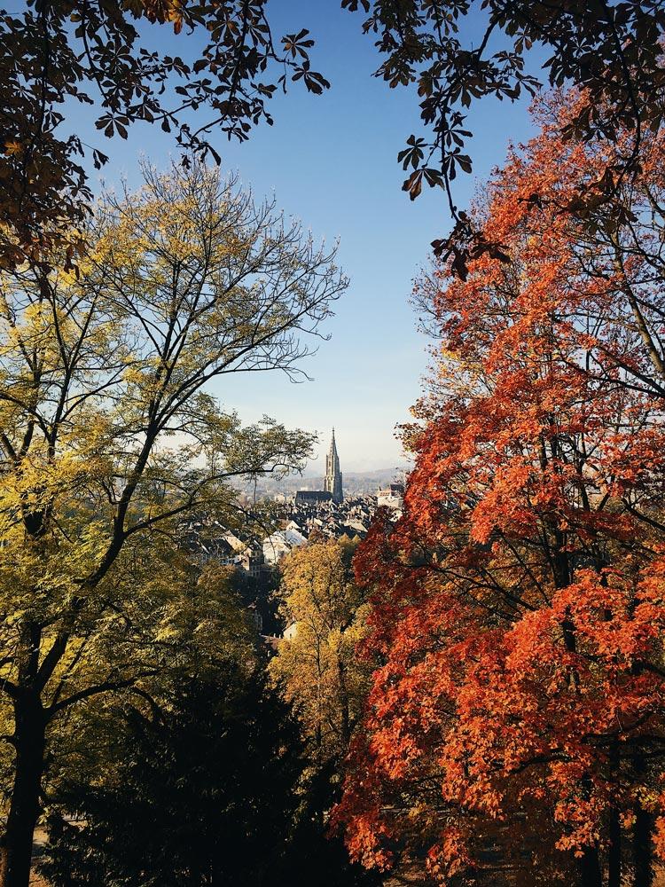 Autumn2_opt.jpg