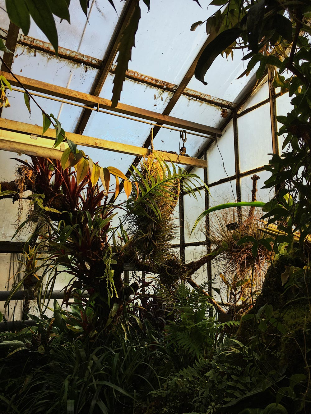 Botanic-garden_opt.jpg