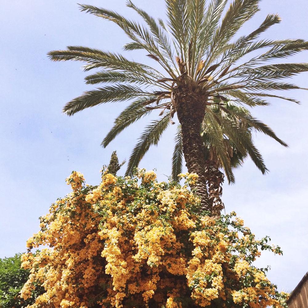 marrakech-flora1.jpg