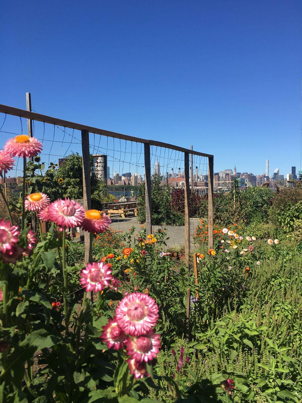 Brooklyn6.jpg