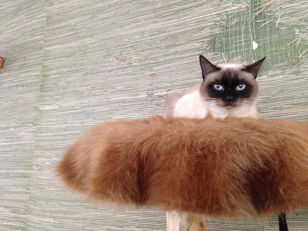 Munich-cat.jpg