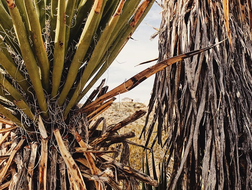 yucca-property3.jpg