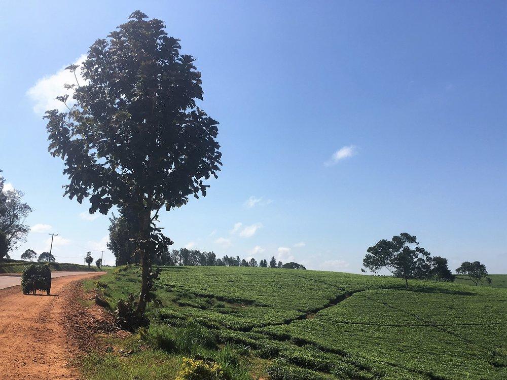 uganda road.jpg