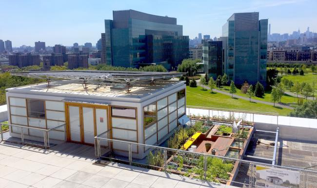 M-City College of New York Solar Roofpod and Harlem Garden for Urban Food_credit Amanda Alston.jpg