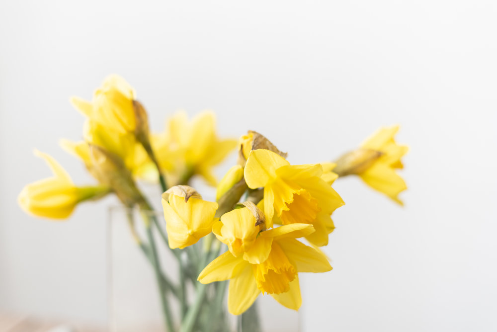 trying to push spring, A bunch of daffodils I picked up at the market.