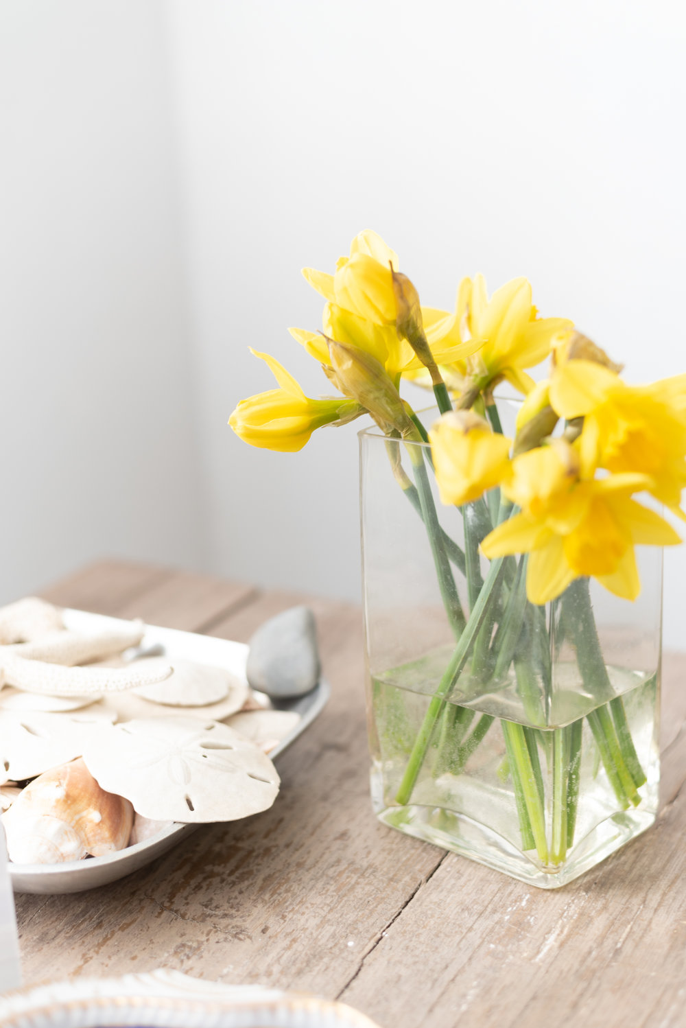 March 2019-12.jpg-daffodils -kateuhryphotography
