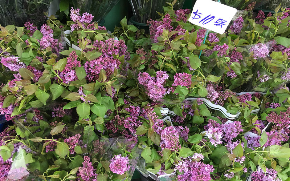 lilacs for sale at bodega