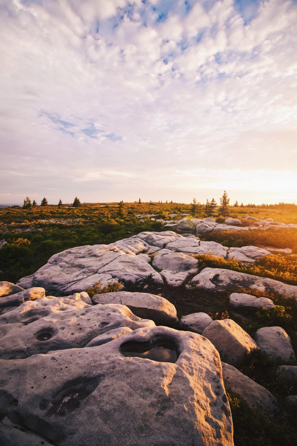 Dolly Sods Sunrise - West Virginia