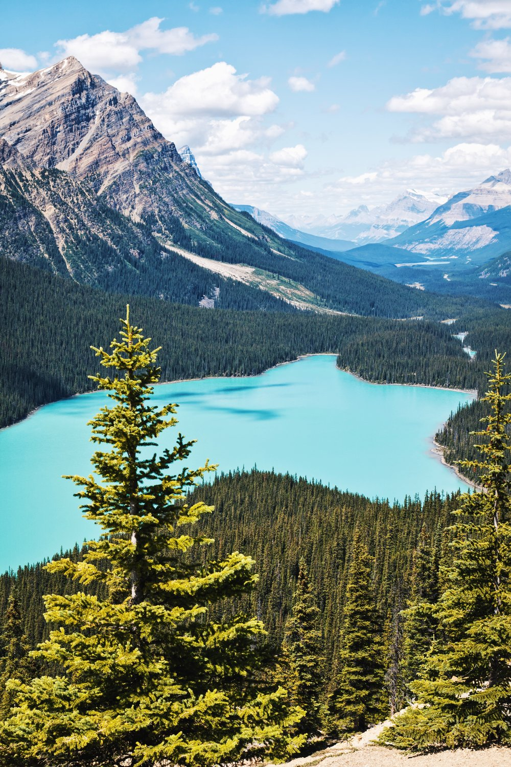 Peyto Lake - Banff National Park