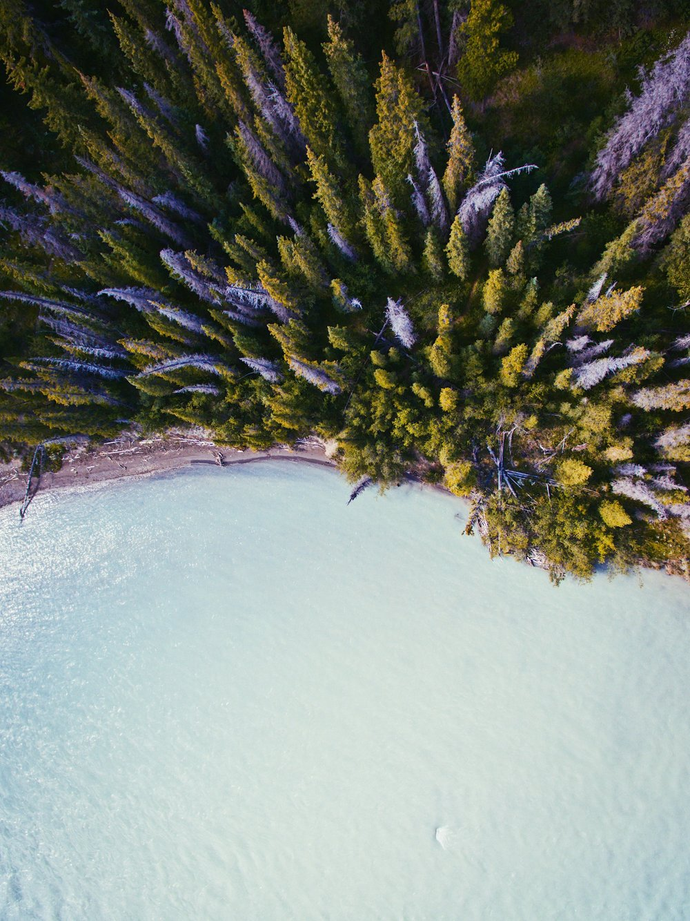 Saskatchewan River - Abraham Lake - Alberta