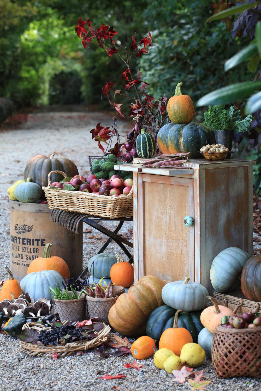 Lynda Hallinan's homegrown harvest. Photo credit: Sally Tagg