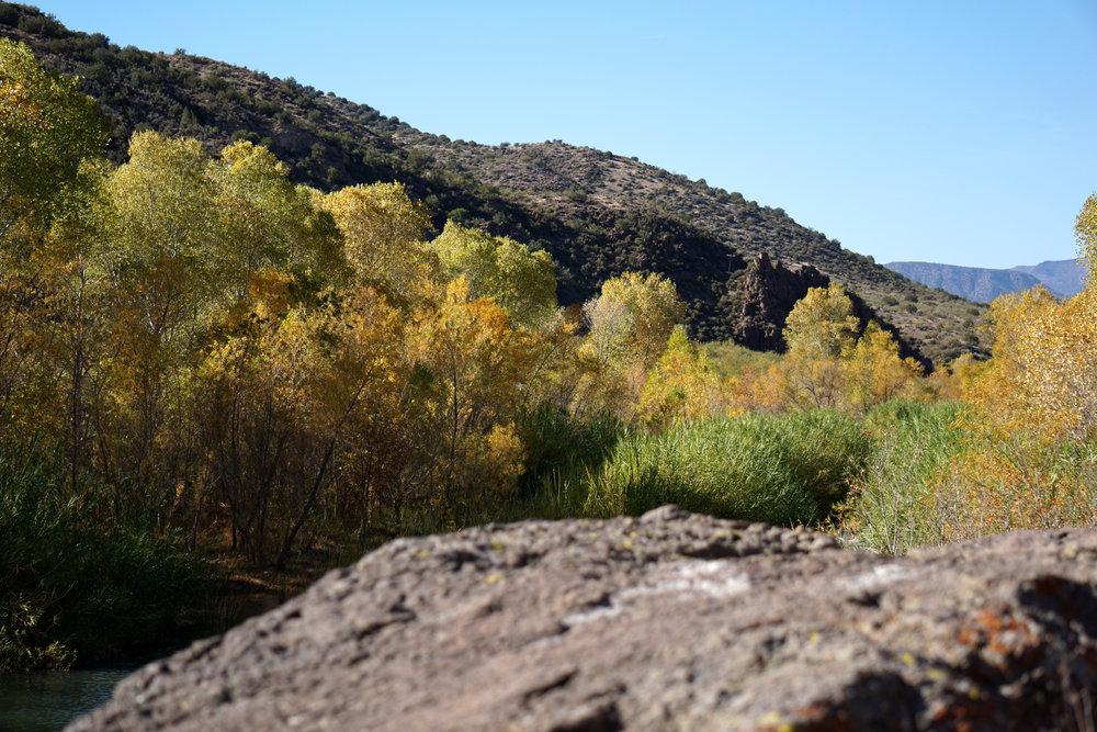 Camp Verde - Trees.jpg