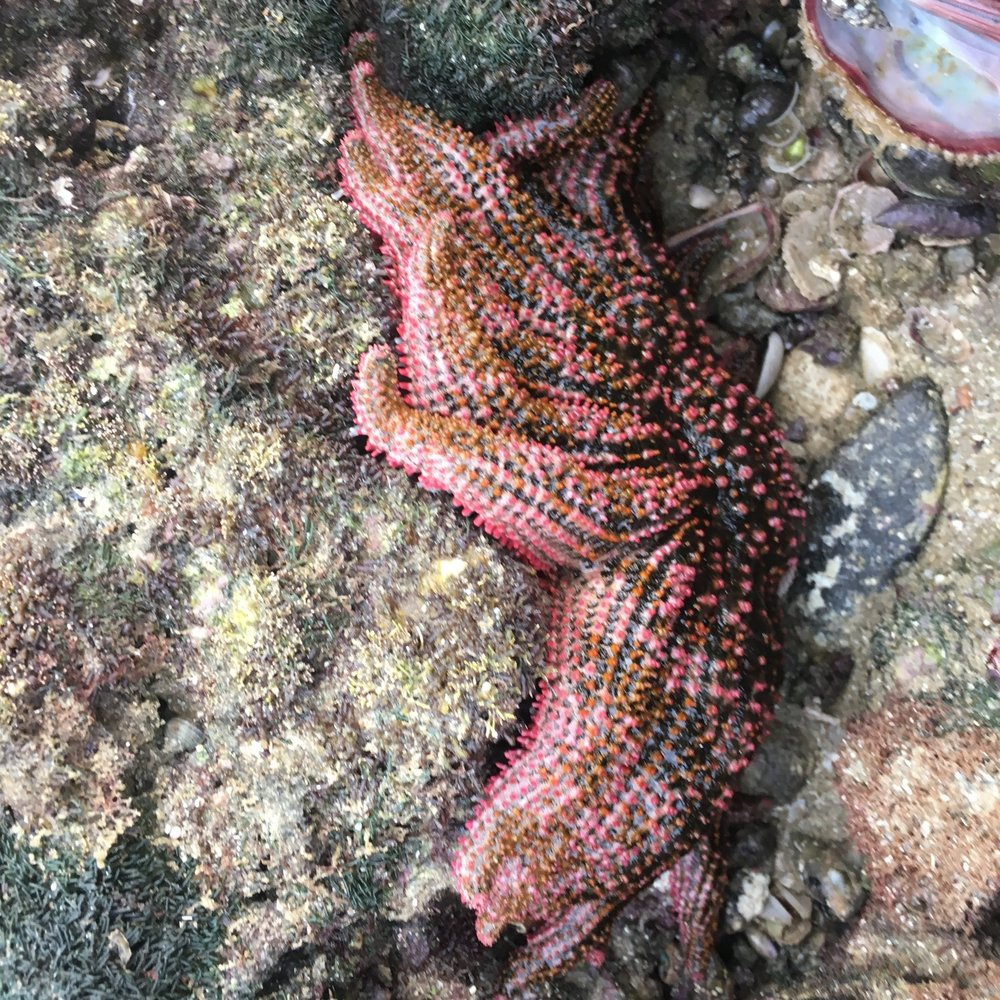 starfish_mexico.JPG