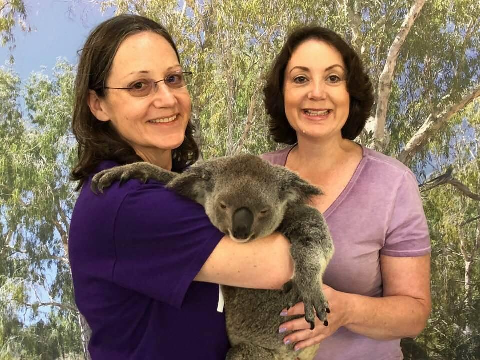 eileen koala australia .jpg