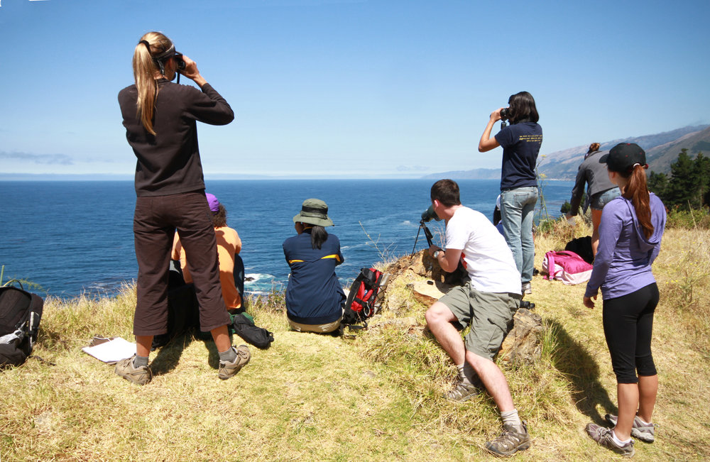 Upcoming Summer Field Study Programs   5 Quarter Credits   Big Sur