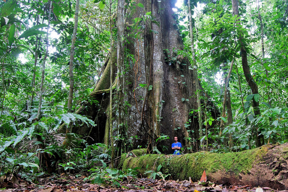 WS Ecuador large tree copy.jpg