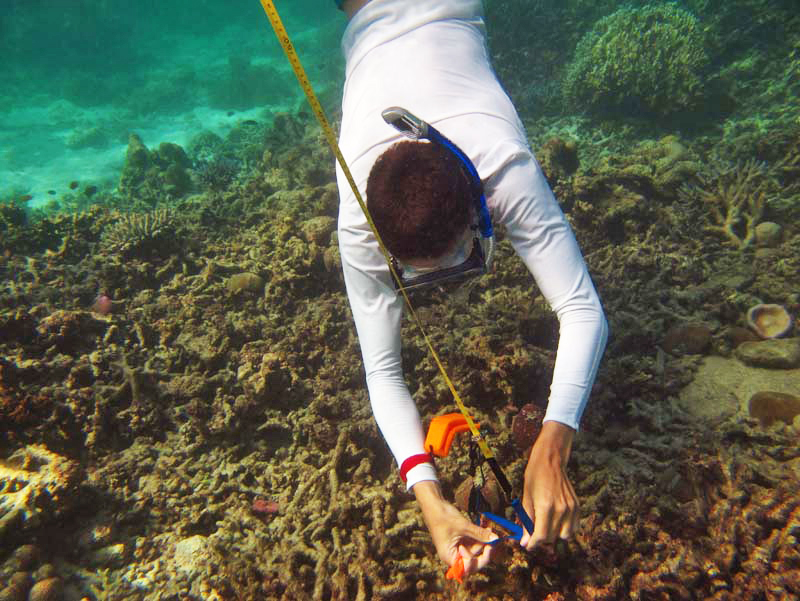 Thailand Underwater measuring IMG_0490 copy.jpg