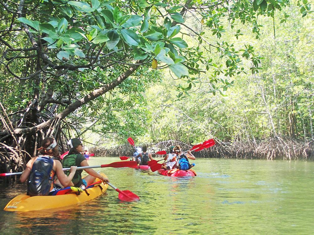 WS Thailand mangrove study 2.jpg