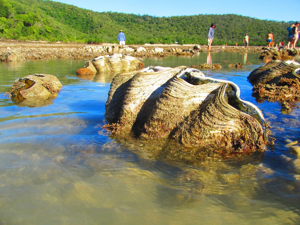 Australia giant clams and students.jpg