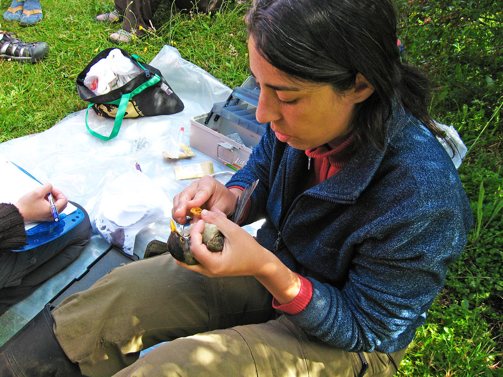 Chile bird banding.jpg