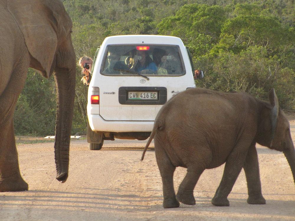 South Africa IMG_3928L.jpg