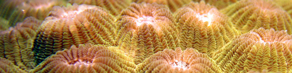 WS indonesia Slice Coral 1114076.jpg
