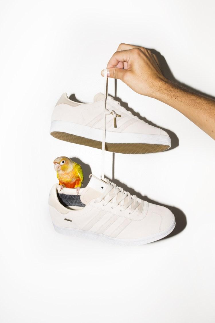 adidas-saint-alfred-gazelle-bird-1.jpg
