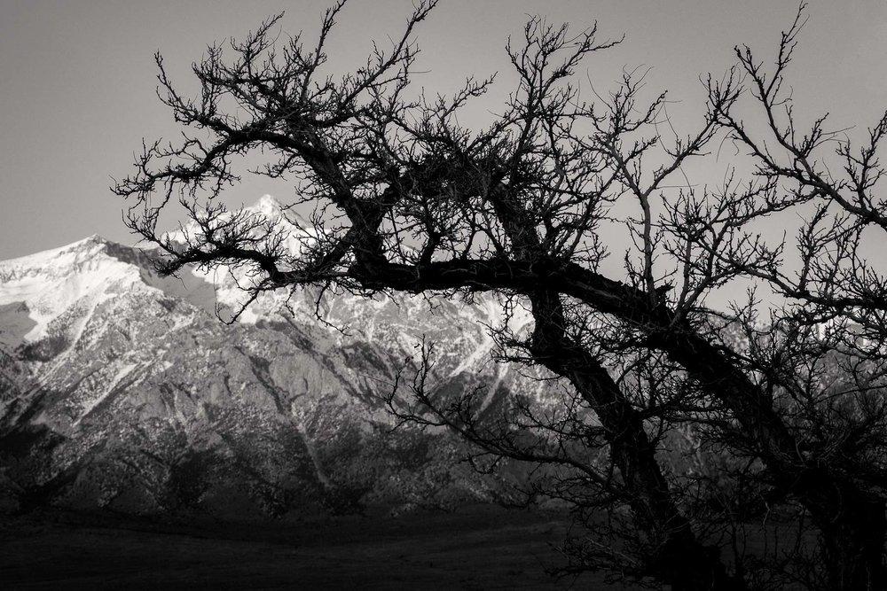 Mauzy-Tree-2.jpg