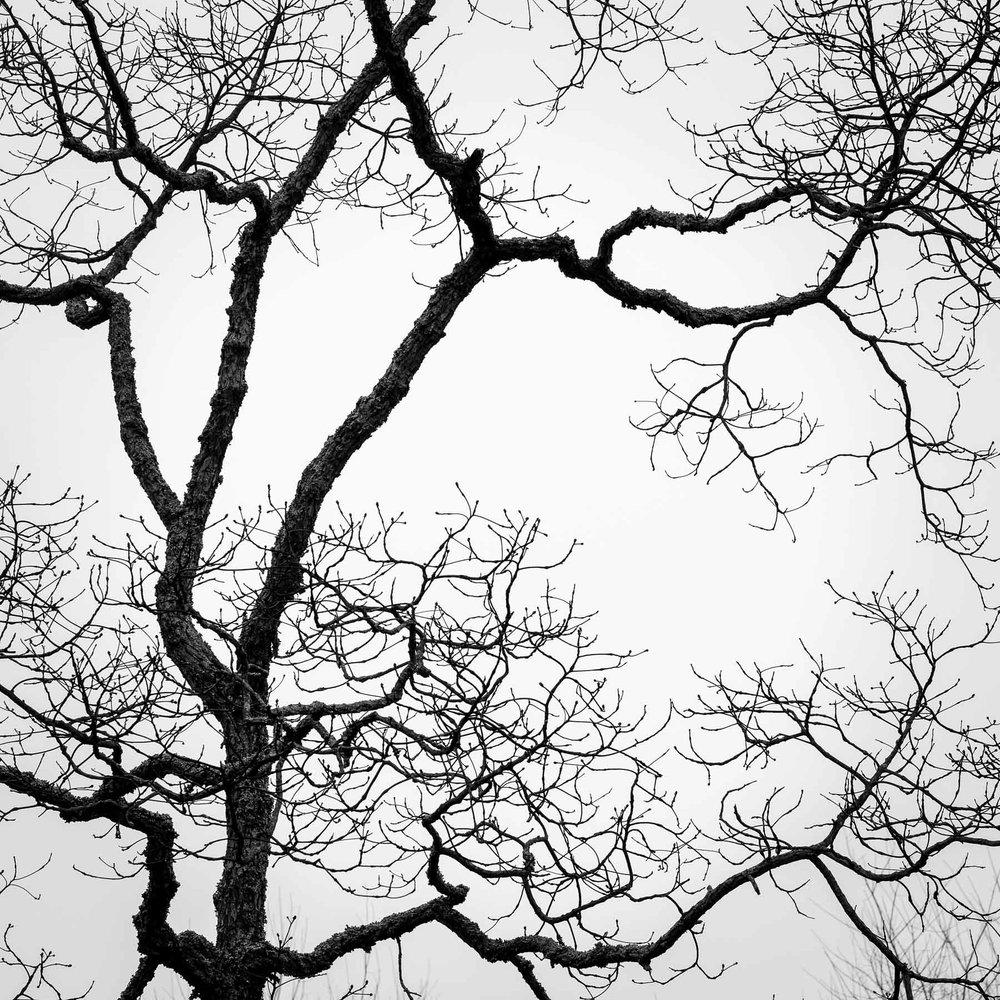 Mauzy-Tree-3.jpg