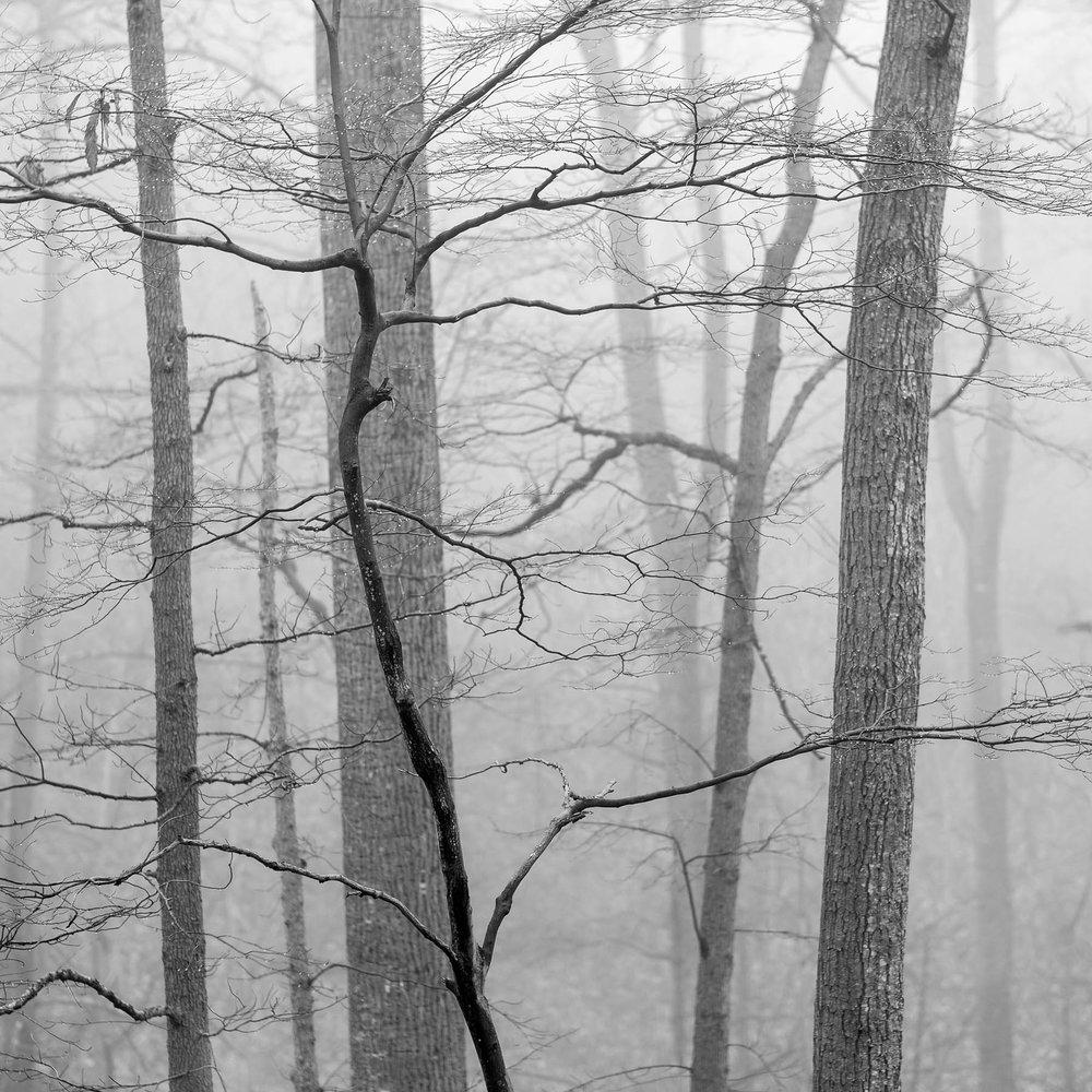 Mauzy-Tree-5.jpg